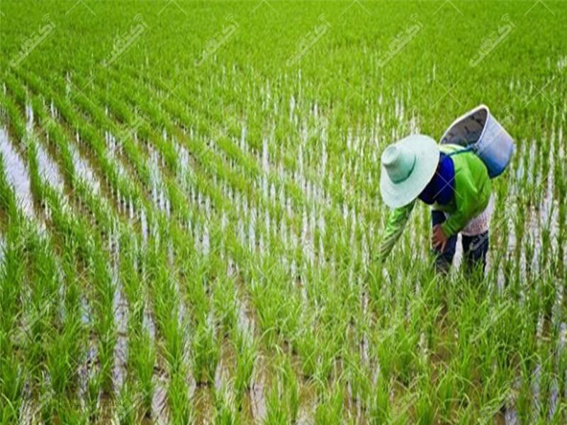 شرکت خدمات کشاورزی و مکانیزاسیون آذر دیار