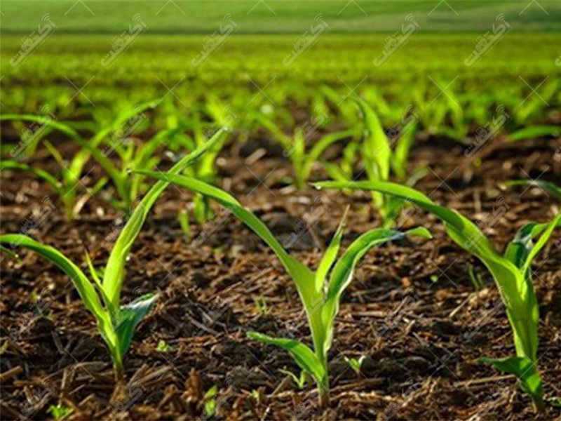 شرکت سبزآوران سمنگان جنوب