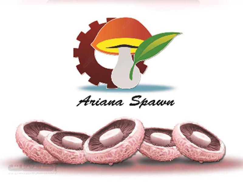 شرکت قارچ آریانا