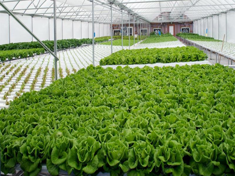شرکت تعاونی گلخانه داران کیمیا سبز اشکذر