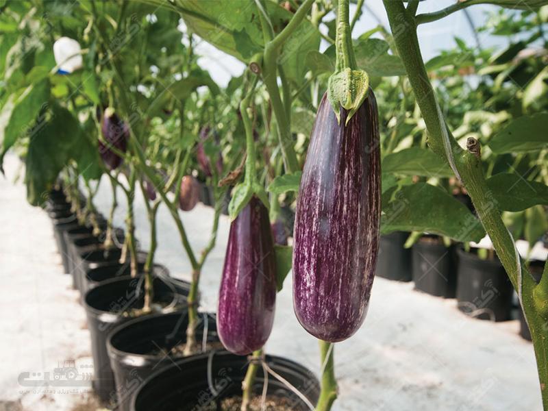 شرکت تعاونی کشاورزی گلخانه داران تفت
