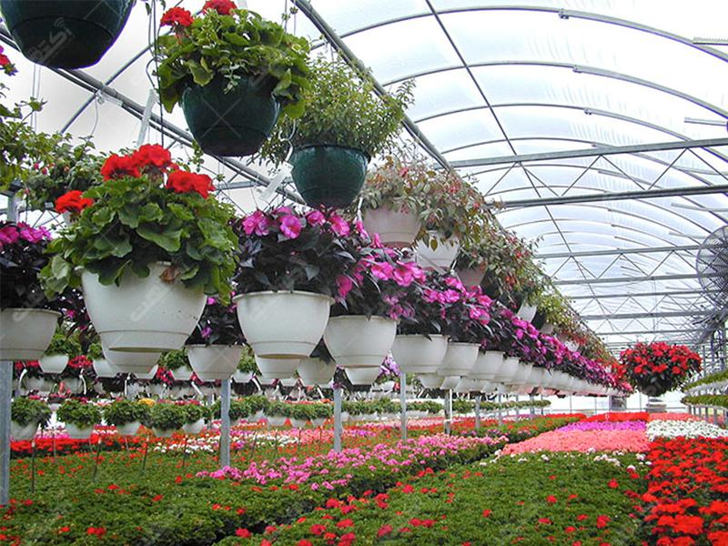 شرکت تعاونی کشاورزی گلخانه داران قزوین دشت