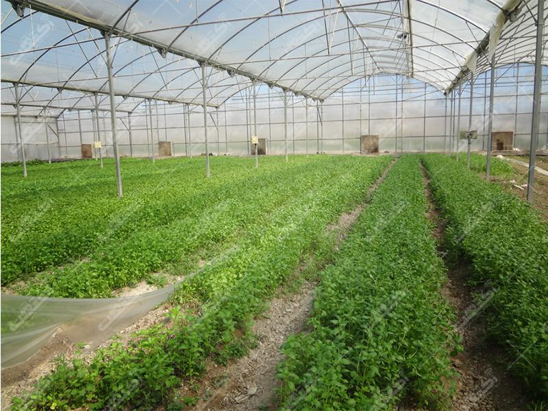شرکت تعاونی سبزیجات گلخانه پیشوا
