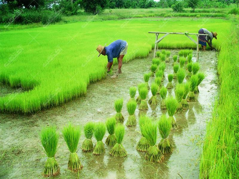 شرکت حامیان سبز