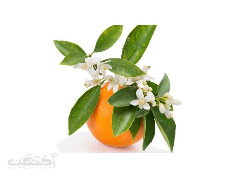 عرق بهار نارنج