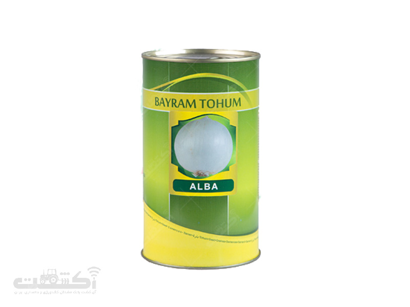 پیاز روز بلند ALBA