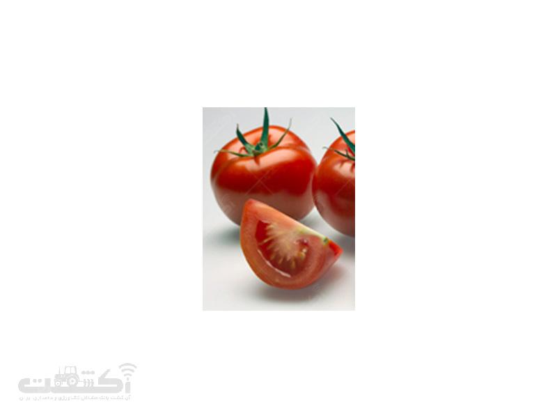 بذر گوجه فرنگی ساخیا