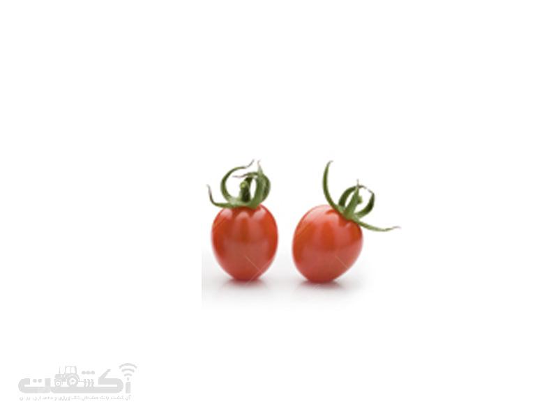 بذر گوجه فرنگی پارسو