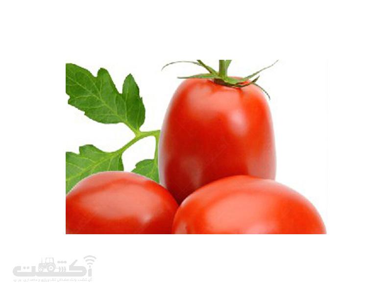 بذر گوجه فرنگی ناهید