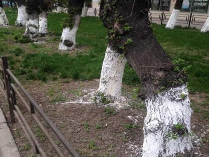 رنگ محافظتی تنه درختان