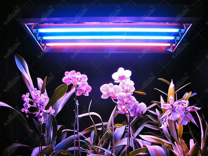 چراغ رشد گیاهان