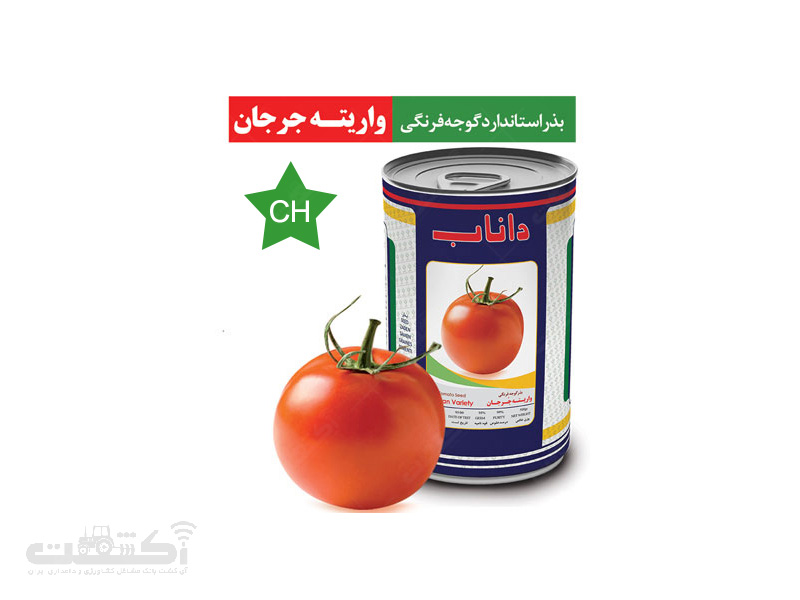 بذر گوجه فرنگی واریته جرجان