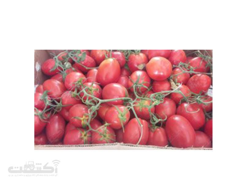 بذر گوجه فرنگی سوپر چف