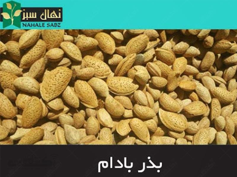 بذر بادام