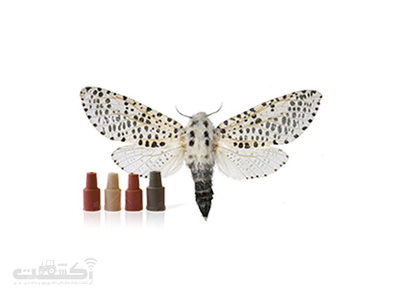 فرمون پروانه فری (كرم خراط)