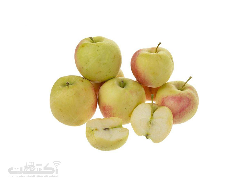 فروش نهال و پیوندک سیب رقم گالا موست