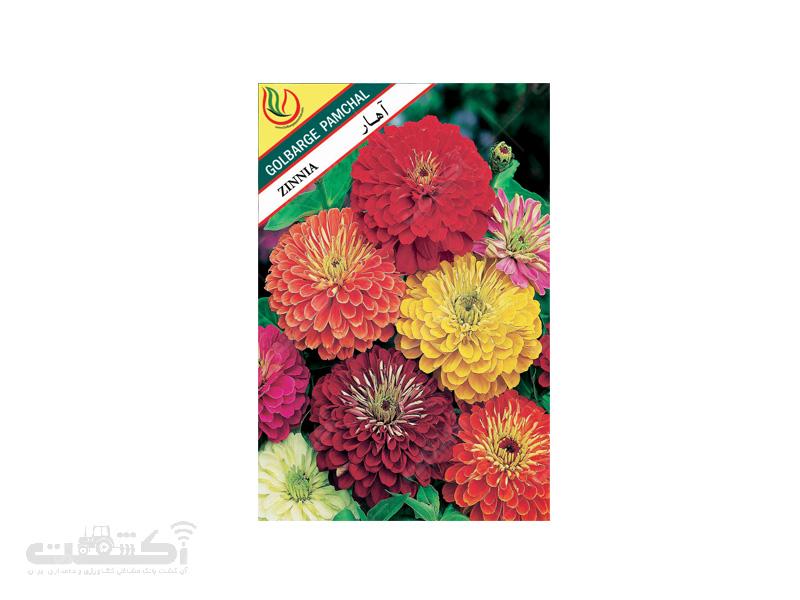 تولید و فروش بذر گل زینتی آهار پرپر الوان