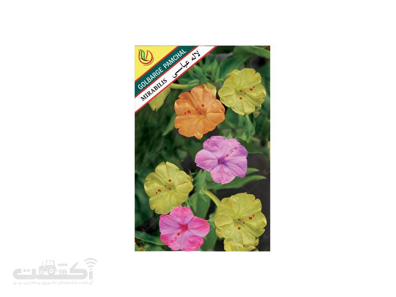 تولید و فروش بذر گل زینتی لاله عباسـی