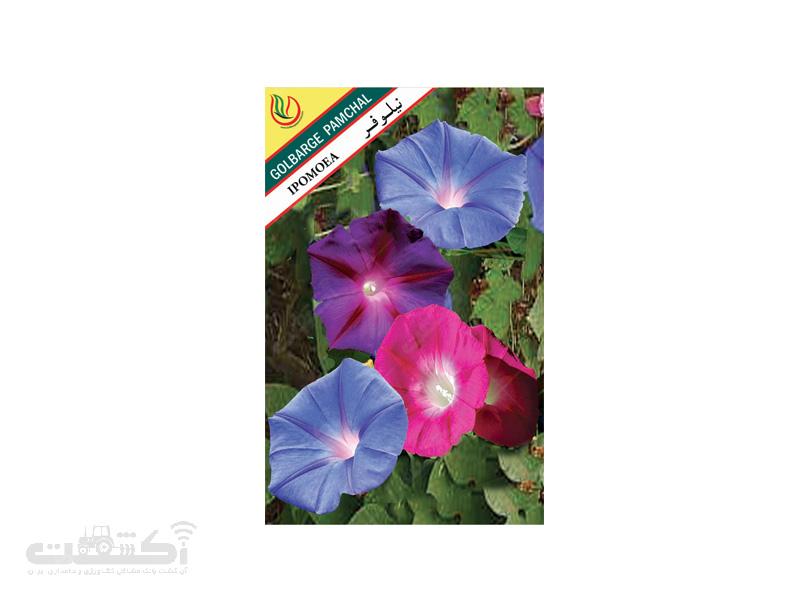 تولید و فروش بذر گل زینتی نیلوفر