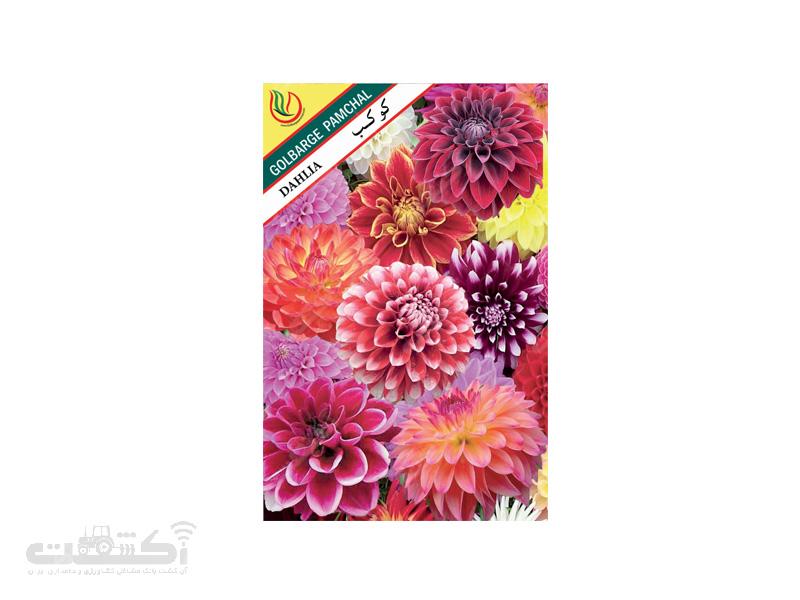 تولید و فروش بذر گل زینتی کوکب