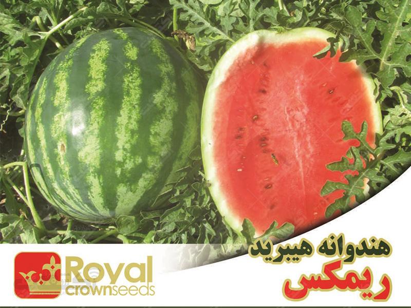 فروش بذر هندوانه هیبرید ریمکس